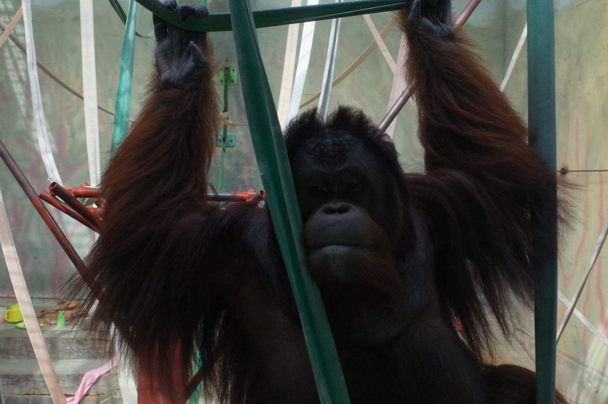 【神戸旅行】パンダにコアラ、チンパン・ウータン・テナガザルも観られる何でもありな神戸市立王子動物園。