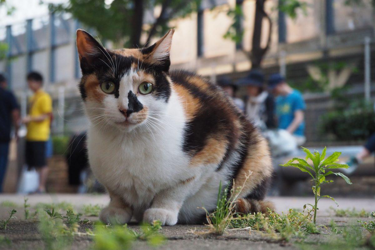 池袋ネコ歩きmini的なカメラ散歩。【東池袋〜ご近所編】