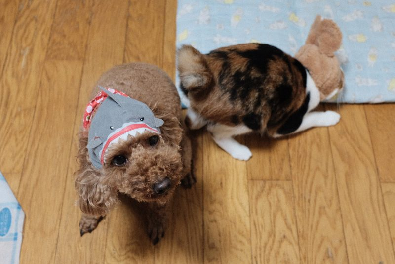 サメに喰われた犬とうさ耳で固まる猫。