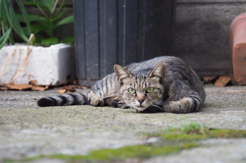 池袋ネコ歩きminiなカメラ散歩。【池袋本町〜池袋二丁目編】