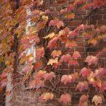池袋紅葉狩りminiなカメラ散歩。【池袋西口編】