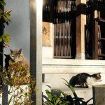 池袋ネコ歩きminiなカメラ散歩。【池袋一丁目〜上池袋〜東池袋編】