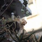 沈ズミの写りはいかなるものか?まずはデジタルで試し撮り!+池袋ネコ歩きmini。
