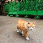 池袋ネコ歩きminiなカメラ散歩。【池袋一丁目〜東池袋編】