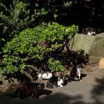 池袋ネコ歩きminiなカメラ散歩。【東池袋〜雑司ヶ谷】