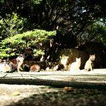 池袋ネコ歩きminiなカメラ散歩。【池袋二丁目〜一丁目〜東池袋】