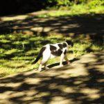 池袋ネコ歩きminiなカメラ散歩。【南池袋】