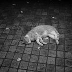 池袋ネコ歩きminiなカメラ散歩。【東池袋〜南池袋〜雑司ヶ谷】