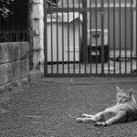 池袋ネコ歩きminiなカメラ散歩。【池袋一丁目〜上池袋〜東池袋】