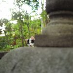 池袋ネコ歩きminiなカメラ散歩。【雑司ヶ谷〜南池袋】