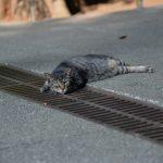 池袋ネコ歩きminiなカメラ散歩。【池袋二丁目〜池袋本町〜上池袋〜東池袋】