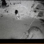 『Nikon ES-2』でスキャンしたモノクロフィルムをPhotoshopでレタッチです。