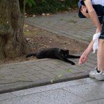 【50回記念】池袋ネコ歩きminiなカメラ散歩。【南池袋〜雑司ヶ谷】