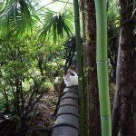 池袋ネコ歩きminiなカメラ散歩。【南池袋〜雑司ヶ谷〜東池袋】