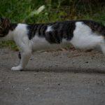 池袋ネコ歩きminiなカメラ散歩。【池袋二丁目〜一丁目〜上池袋〜東池袋】