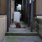 池袋ネコ歩きminiなカメラ散歩。【新大塚〜東池袋〜上池袋〜池袋一丁目】