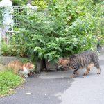 池袋ネコ歩きminiなカメラ散歩。【池袋二丁目〜一丁目〜上池袋】