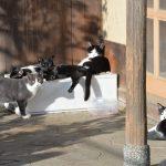 池袋ネコ歩きminiなカメラ散歩。【南池袋〜雑司ヶ谷〜南池袋】