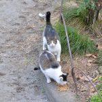 池袋ネコ歩きminiなカメラ散歩。【池袋二丁目〜東池袋】