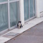 池袋ネコ歩きminiなカメラ散歩。【池袋一丁目〜東池袋、南池袋〜雑司ヶ谷】