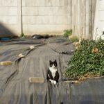 池袋ネコ歩きminiなカメラ散歩。【南池袋〜雑司ヶ谷】