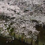 池袋ネコ歩きではなく桜歩きminiなカメラ散歩。【南池袋〜雑司ヶ谷〜西早稲田〜西池袋】