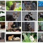 【100回記念】池袋ネコ歩きminiなカメラ散歩。【猫塗れ大集合!】
