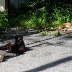 池袋ネコ歩きminiなカメラ散歩。【上池袋〜池袋一丁目〜東池袋】