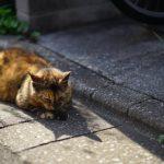 池袋ネコ歩きminiなカメラ散歩。【大塚三業通り、南池袋〜雑司ヶ谷】