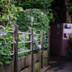 池袋紫陽花歩きなカメラ散歩【雑司ヶ谷〜南池袋】