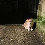 池袋ネコ歩きminiなカメラ散歩。【池袋二丁目〜東池袋、南池袋〜雑司ヶ谷】