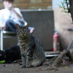池袋ネコ歩きminiなカメラ散歩。【南池袋〜雑司ヶ谷、池袋一丁目〜東池袋】
