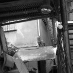 池袋ネコ歩きminiなカメラ散歩。【谷端川緑道〜電車の見える公園】