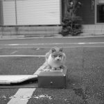 池袋ネコ歩きminiなカメラ散歩。【池袋三丁目〜谷端川緑道〜池袋二丁目】