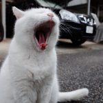 池袋ネコ歩きminiなカメラ散歩。【雑司ヶ谷〜南池袋、池袋二丁目】
