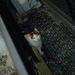 池袋ネコ歩きminiなカメラ散歩。【池袋一丁目〜池袋本町】